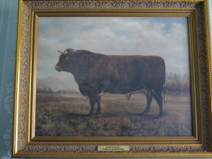 Painting of a shorthorn bull